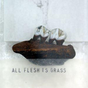 allflesh_002
